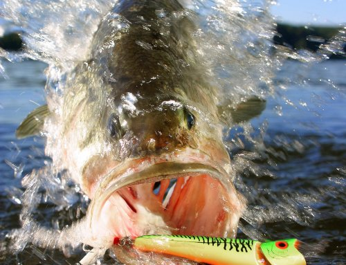 Must Try Bass Baits