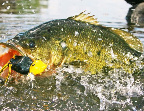 Catch Your Biggest Bass in October – Podcast