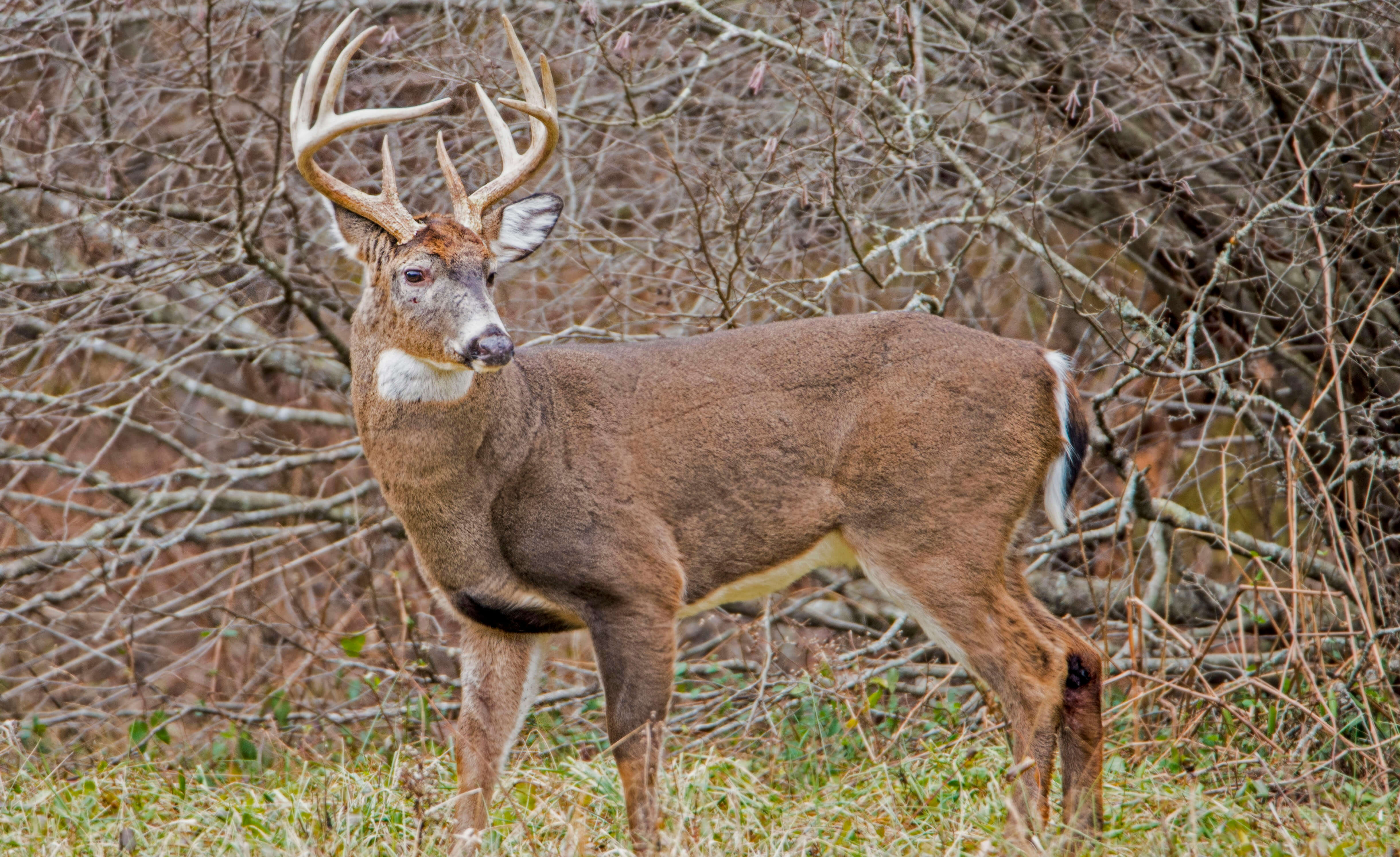 Deer Hunting Secrets