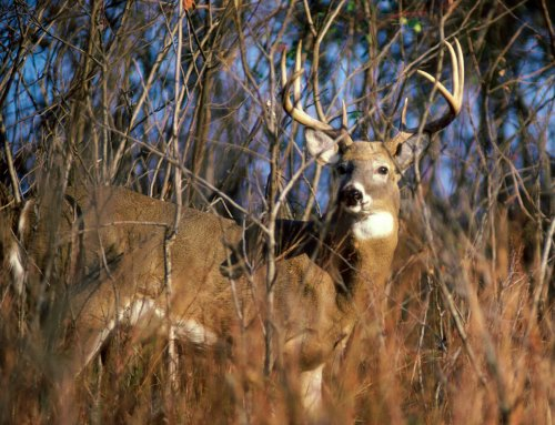 The Iowa Sportsman Podcast – Turn Deer Hunting Failures Into Successes!