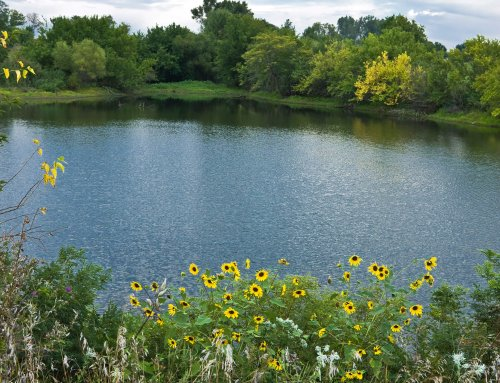 How to make your Farm Pond a Fish Haven