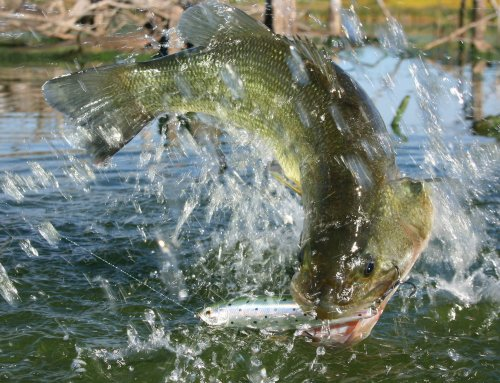Spring Bass Fishing Tactics – Podcast