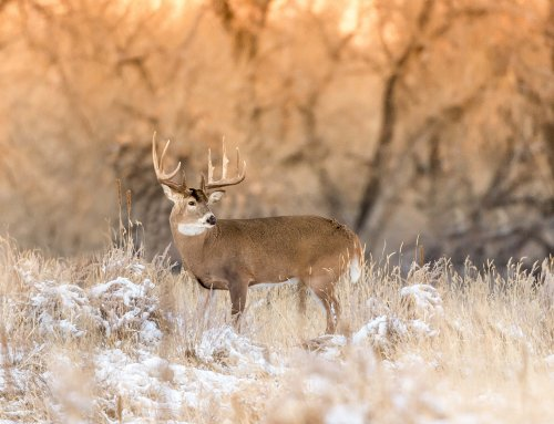 Late Season Whitetail Strategy – Podcast