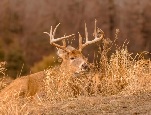 Hunting The Pre-Rut-Podcast
