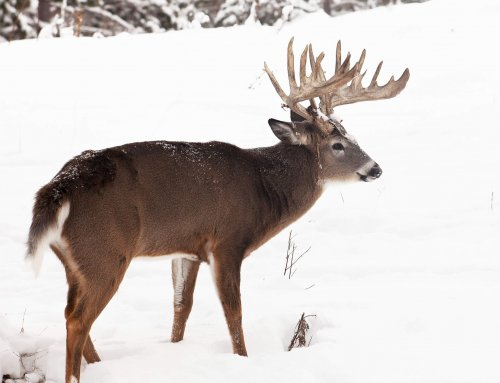 Deer Hunting 101: Mentored Deer Hunts