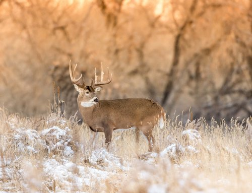 A DEER HUNTERS JOURNEY