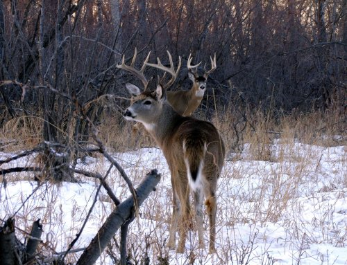 Security Routes Are the Key To Whitetail Success!