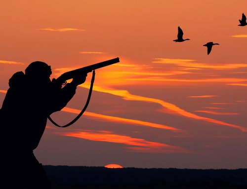Wingshooting: Improving Success on Tough Shots