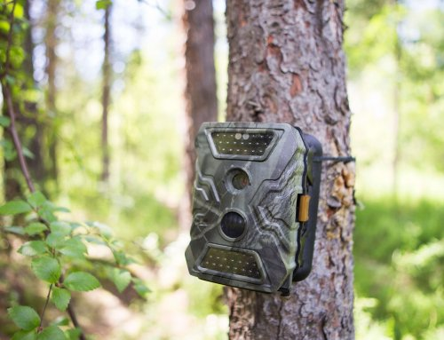 Using Trail Cameras with a Purpose