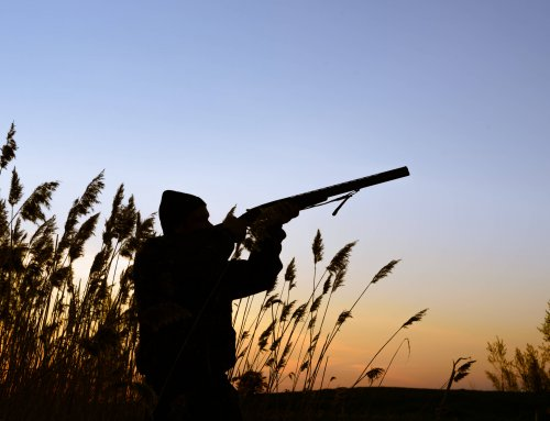 Trap, Skeet, and Sporting Clays; Three Great Ways to Improve Wing Shooting