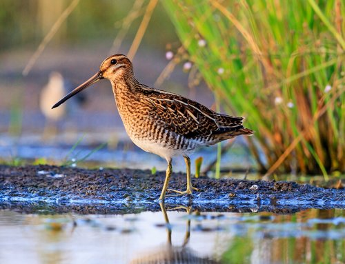 Snipe Hunting Defined