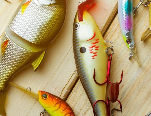 Tackle Talk: Go-To Lures for Multi-Species Angling