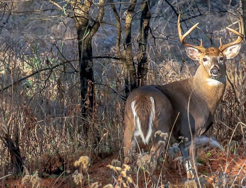 Attracting More Bucks During The Rut