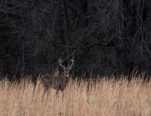 Public Land Success: Tips to Bagging a Mature Buck on Iowa's Public Hunting Land