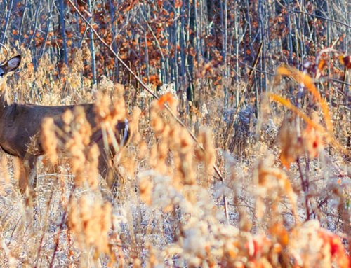 5 Tips for The Rut: They'll Only Cost You a Buck