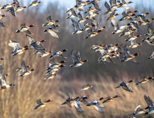 Patterning Your Waterfowl Shotgun