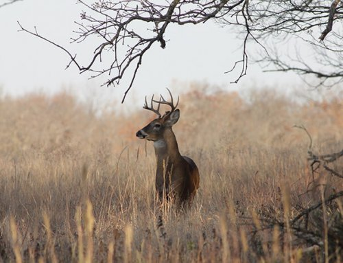 Time To Set Your Treestand!