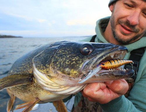 Trolling for Walleyes over the Weeds