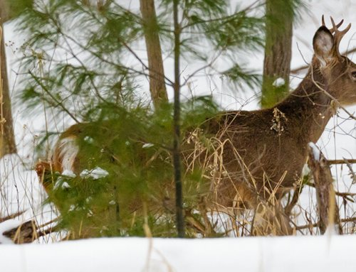 Whitetails 365: December – Low Impact Hunting